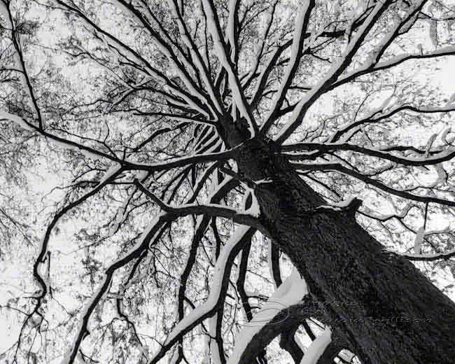 Tree Photo Black & White Abstract Fine Art Print Top 8x10 ...