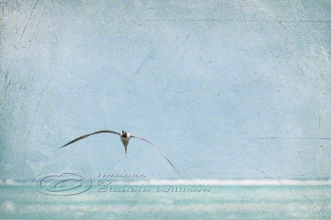 "Flying seagull beach photo ocean grunge look teal print 8x12"""