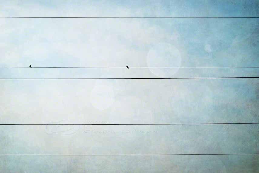 "Bird on wire photo grunge teal whimsical print 8x12"""