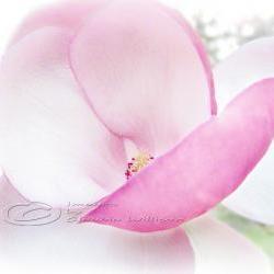 "Flower Photo pink magnolia close up blossom pink light 8x10"" print"