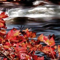 "Season Photo fall photo artistic photo warm colors river 8x12"""