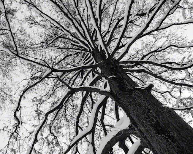 Tree Photo Black Amp White Abstract Fine Art Print Top 8x10